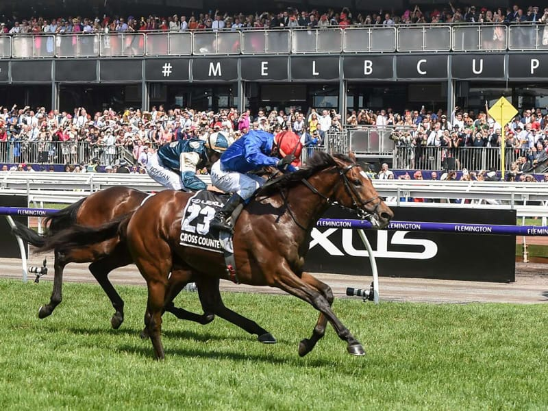 Watch the Melbourne Cup Online
